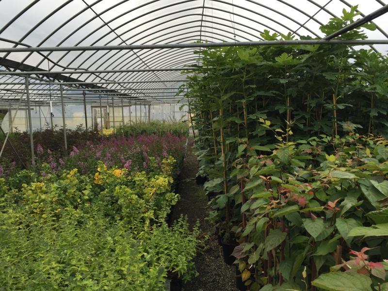 Greenhouse shot (2)
