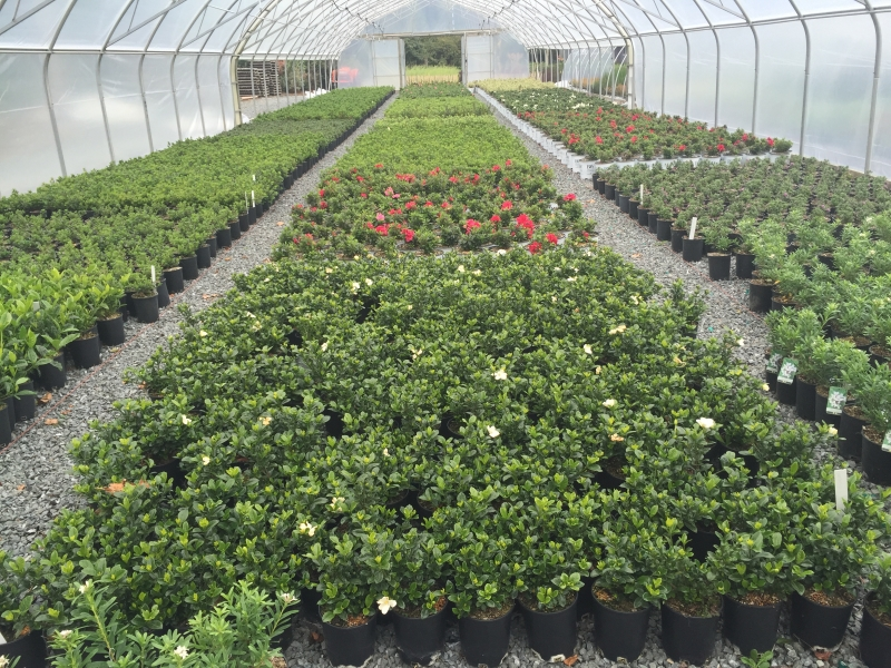 Greenhouse shot