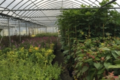 Greenhouse shot (2)